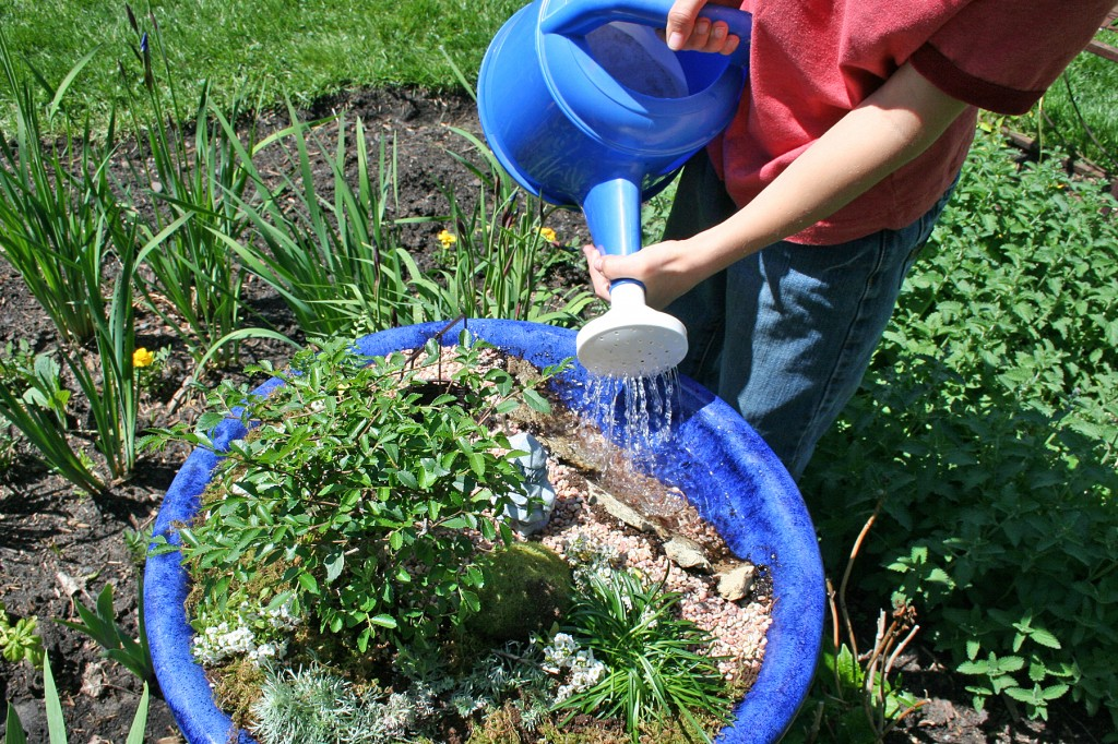 Creating a fairy or gnome garden for Filling in a pond