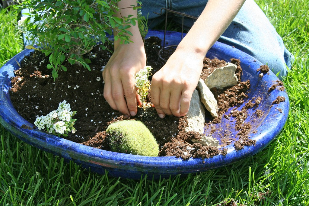 Creating a fairy or gnome garden