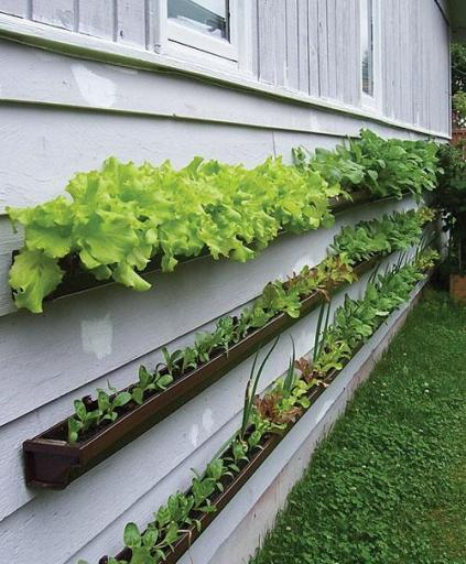 Gutter vegetable planters