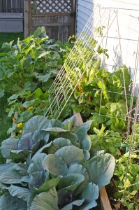 Urban vegetable gardening: Progress (or lack-thereof)