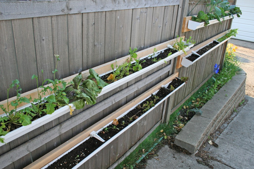 Growing an urban vegetable garden is hard borealis for Rain gutter planter box