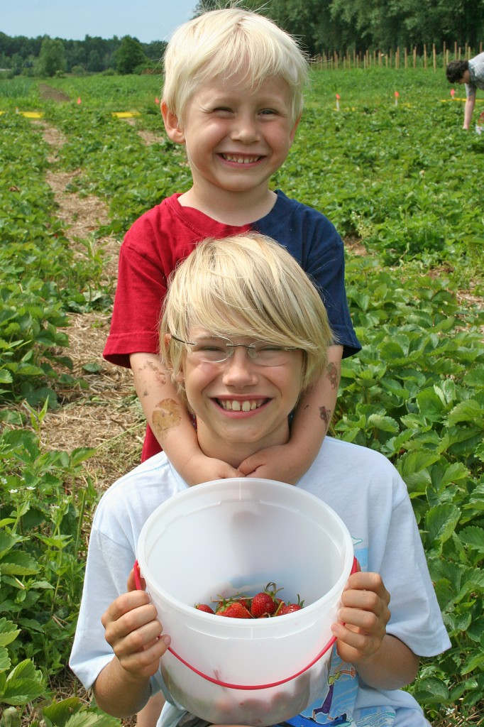 Two boys with u-pick strawberries.