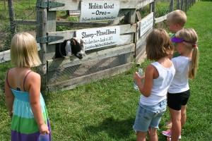 Oreo the Goat
