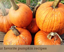 Four favorite pumpkin recipes from Borealis Blog