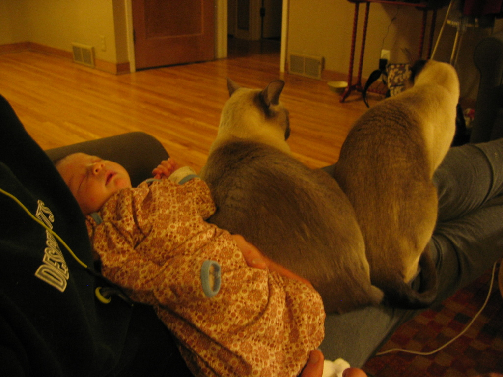 Bee sacked out with cats
